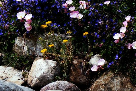 flowers and plants for rock gardens how to design a rock