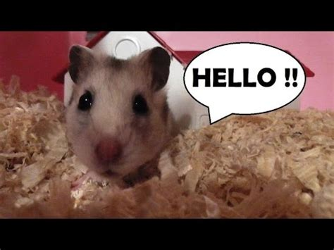 Hammy Hamster Popping out to say Hello ! - YouTube