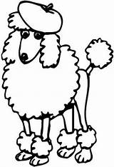 Poodles Standard Coloring Sheets Print sketch template