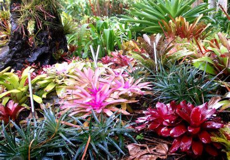 bromeliads australia nursery 17 best images about bromelias on pinterest gardens rainforests and plants