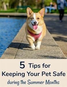 5 Tips for Keeping Your Pet Safe during the Summer Months ...