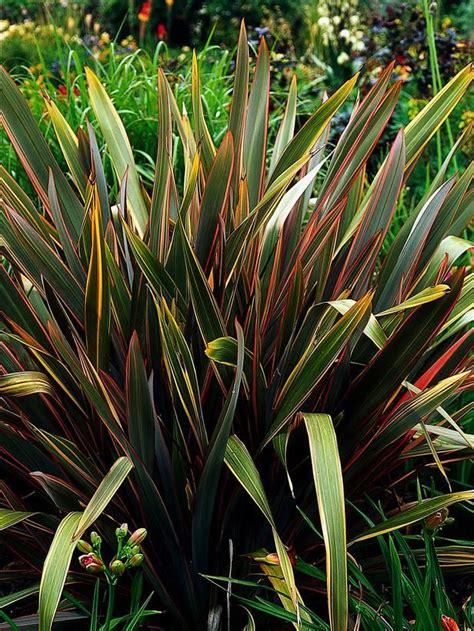 Best 25+ Full Sun Plants Ideas On Pinterest  Full Sun