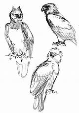 Coloring Harpy Eagle Coloringsun sketch template