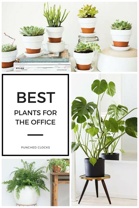 12 Best Plants For The Office  Punched Clocks