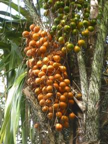 Guyana Fruits and Vegetables