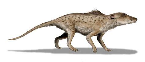 Category:Paleogene Animals Cool Dino Facts Wiki FANDOM