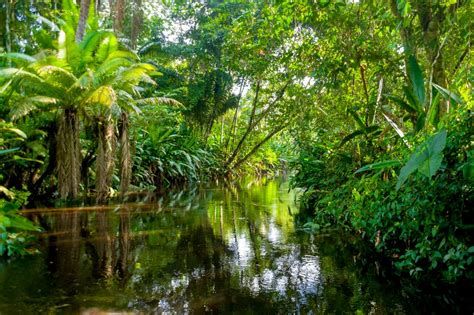 Africa's Rainforests Are Different. Why It Matters That