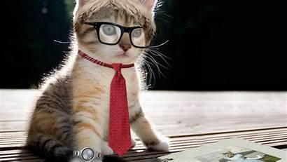 Cat Wallpapers Backgrounds Cool Desktop Funny