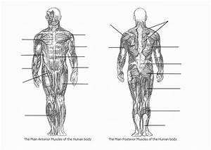 Fill In The Blank Full Body Muscle Diagram