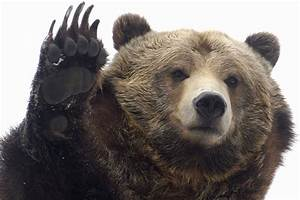 2 grizzly bears move to the Central Park Zoo | New York Post  Grizzly