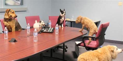 animali in ufficio oggi 232 la giornata mondiale dei cani in ufficio con fido