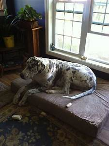 1000 images about big barker beauties on pinterest With big barker giant dog bed