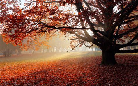 Autumn Wallpapers 4k by Wallpaper Autumn Park Foliage Foggy 4k Nature 3526
