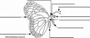 Label The Butterfly Printout