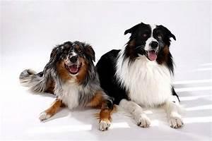 Mietwohnung Mit Hund : die welt unserer hunde tierportal animals ~ Lizthompson.info Haus und Dekorationen