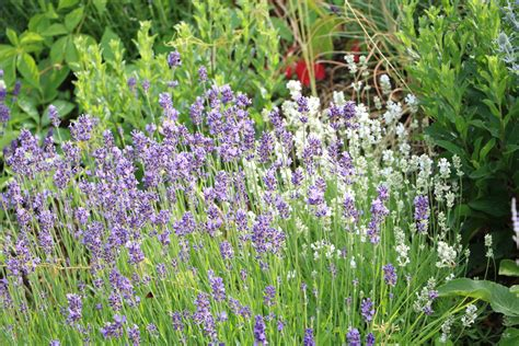 Garten Pflanzen Sonne by K 252 Belpflanzen F 252 R Die Terrasse Bei Wenig Wasser Volle