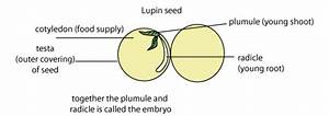 Seed Development