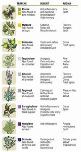 Common Essential Oil Terpene Quick Reference Chart