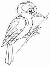 Coloring Woodpecker Woodpeckers Ausmalbilder Specht Birds Printable Malvorlagen Ausdrucken Kostenlos Zum sketch template