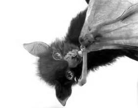 Cute Bat Drawings