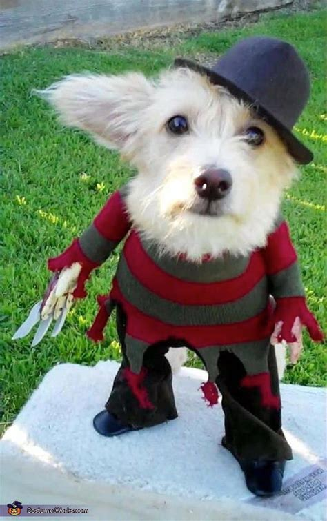 Best Halloween Costumes Images On Pinterest Costume Ideas
