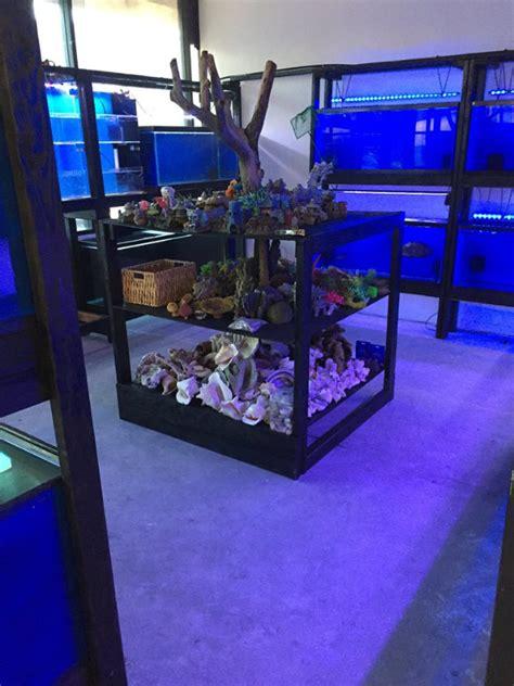 discount aquarium fish reef arizona fish stores