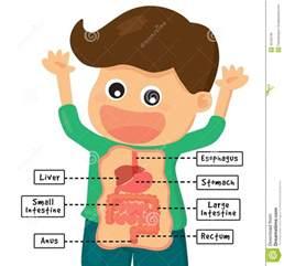 Human Digestive System Clip Art