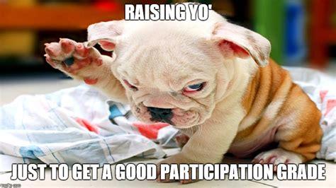 Annoyed Dog Meme - image tagged in school annoyed dog annoying imgflip