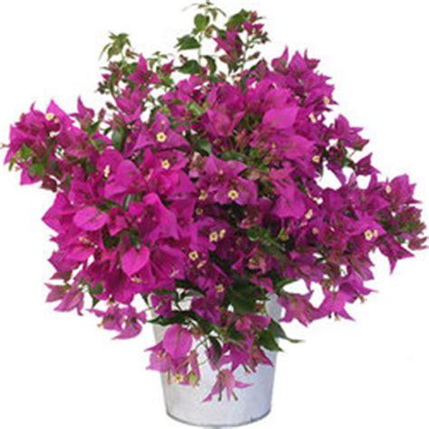 plantes et arbustes livraison 224 domicile aquarelle