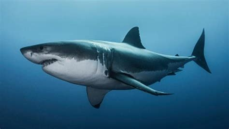 Why shark attacks could be on the rise around the world