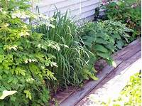 plants for deep shade deep shade-rocky poor soil (soil forum at permies)