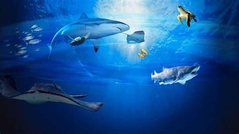 chambre d hotes a st malo aquarium grand aquarium malo