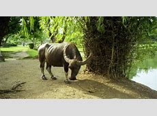 How the carabao was fooled ~ My Philippines