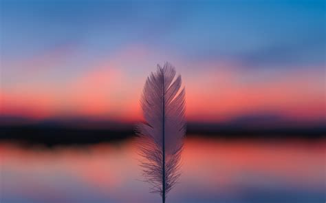 Feather Focus Blur Sunset 5k, HD Nature, 4k Wallpapers ...