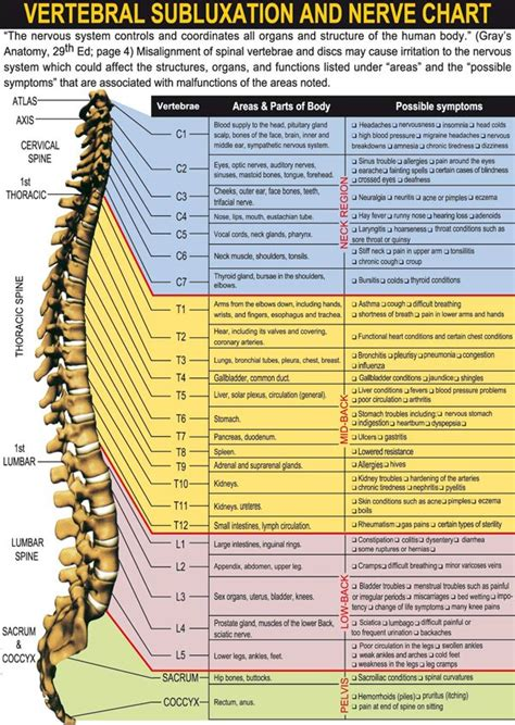 nerve chart chiropractors rio rancho nm absolute