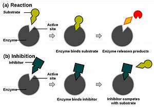 Principles Of Biochemistry  Enzymes