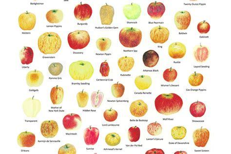 chefs talk favourite bc apples