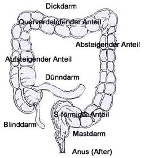 Darmabschnitte - Funktionen - Funktionsstörungen