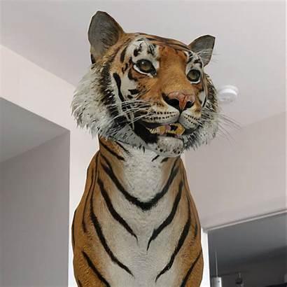 Google Animals Tiger Feature Backgrounds Popsugar Camera