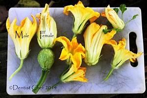 Pumpkin Blossoms Fritter