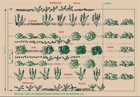 welche pflanzen vertragen sich tabelle gute nachbarn im gem 252 sebeet lagerhaus