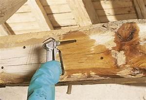 produits de traitement des insectes xylophages cecil With traitement des bois exterieurs