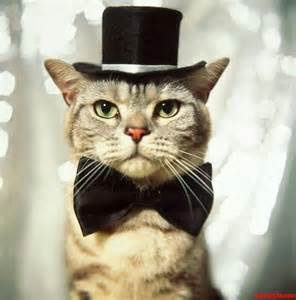 top hat cat bow tie and top hat cats hq pictures of cats