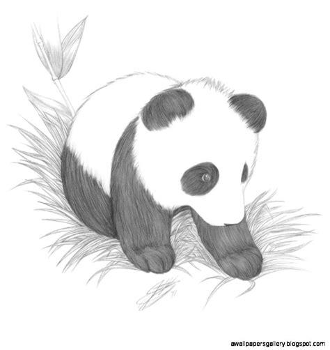 cute baby animal drawings  pencil