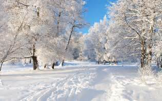University Kentucky Christmas Tree
