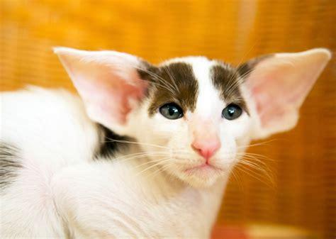 Least Trendy Cat Names Of 2014