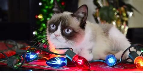 funny grumpy cat christmas wishes  sayings