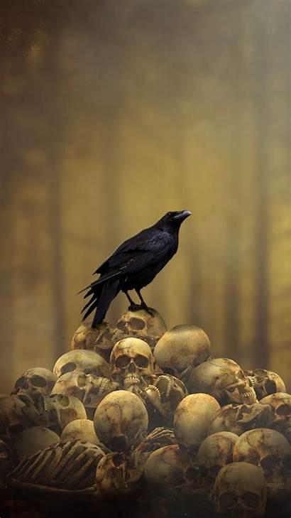 Raven Fantasy Skulls Gothic Dark Heap Bird