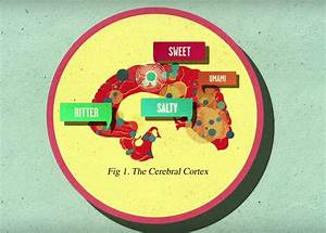 How Does Sugar Affect The Brain  A Video Explanation