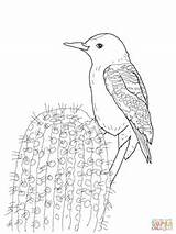 Woodpecker Coloring Gila Pages Woodpeckers Monster Printable Supercoloring Sketch Template Lizard Credit Larger sketch template